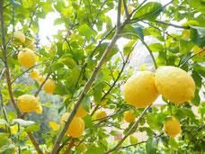 Sizilien, Herkunft des Zitronenöls
