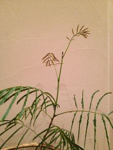 画像 エバーフレッシュ 観葉植物