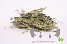 Echinaceablad