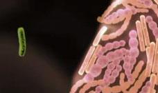 Darmbakterien Darmmilieu Darmgesundheit Mikrobiom Kinder Übergewicht Berlin