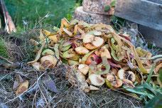 Dauerhumus, Kompost, Mulch, Flächenkompost