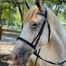 Pumuckel - Private and Lunge line horse
