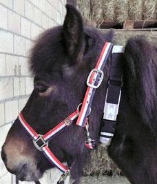 Stretchhalsband Pferd mit Soll-Bruch-Stelle