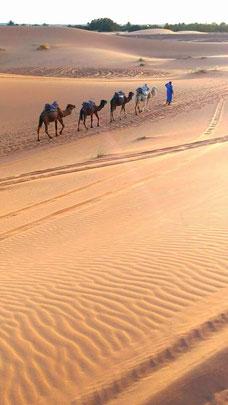 モロッコ/サハラ砂漠でラクダトレッキングがおすすめ♬