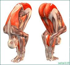 腰痛予防のストレッチ