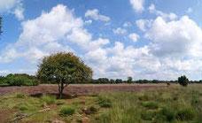 nature reserve 'Mantingerzand' Drenthe