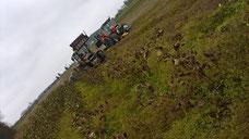 Feld mit Yacon Pflanzen und Traktor bereit zum Abtransport der Inkawurzeln. Zur Erntezeit werden die Blätter der Yaconpflanze nach dem ersten Frost welk.