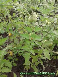 Photo développer l'agriculture