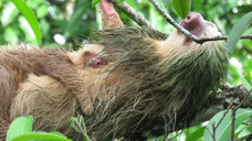 Hiking tour to see the sloth