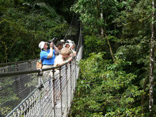 One day excursion: Hanging Bridges, Arenal 1968 trails, Chocolate Tour