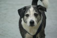 Einzeltraining für Hunde