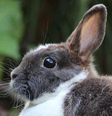 Allergie Vergesellschaftung Naturheilkunde, Kräuter Kleintiere Nagetier Kaninchen Meerschweinchen Homöopathie Pflanzenheilkunde