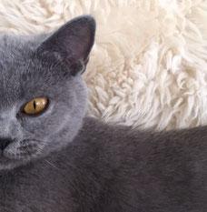 Katze Katzenrudel Vergesellschaftung Fütterungsberatung Eingewöhnung Futterplan Verhaltensstörung Unsauberkeit Aggression Angst Vergesellschaftung Bachblüten