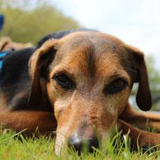Magen Darm Durchfall Darmentzündung psychische Probleme Trauma Tierschutz BARF Mykotherapie Mykotherapeutin
