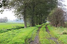 Eichgrabenweg