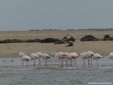 Flamingos am Pelican Point