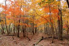 秋の四季の森