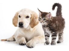 croquettes chien chat bio lacanau océan