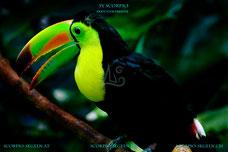 Mit der Segelyacht Scorpio auf Landgang in der Karibik und einen Papageien entdeckt