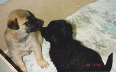 Cassy und Falko
