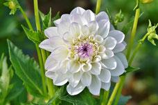 Achtsam bleiben in der Blüte des Lebens