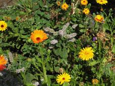 Bienenfreundlicher Garten, Harzer Gebirgsimkerei