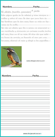 Hacer las caligrafías y responder a las preguntas del ejercicio de comprensión lectora