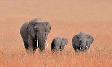 Tanzania en Familia