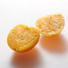 食用ほおずき「太陽の子」断面