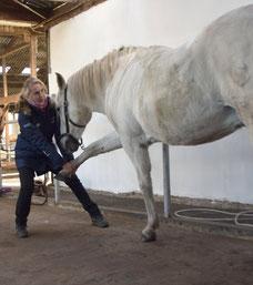 Hundephysiotherapie und Hundechiropraktik Pferdephysiotherapie