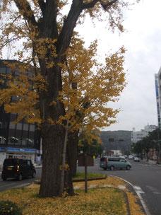 黄色い葉が鮮やかないちょうの木