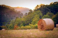 私たちは、合計約50トンの小さな丸いベールを使って干し草の納屋を埋める計画。 Photo by Adobe Stock/Sebastian