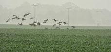 Felder , Zugvögel , Jahreszeit , Vögel , Landschaft , Grün , Naturfotografie