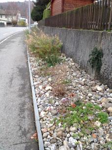 Holzikerstrasse Schöftland Ruderalflächenpflege Aufnahme Niklaus Huber
