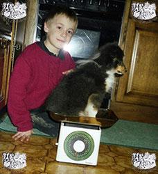 ec chiens education chiot dès l'arrivée à la maison pour que les enfants puissent être en sécurité avec le chien