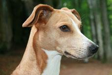 Piper Produkttesterin bei Anya & Co. Schönes für den Hund