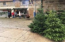 Weihnachtsbäume, Weihnachtsbaum, Weihnachtsbaum in deiner nähe, Weihnachten, direkt vom Erzeuger, direkt vom Bauern, Hofladen, Holweg, Hof Holweg, Coppenbrügge, Hameln-Pyrmont, Hameln, regional, Bauernhof