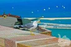 Один из моих любимых кадров --- чайка на страже форта Монжуик
