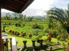 Mooie uitzicht vanuit de kamers van het Sawah Indah villas