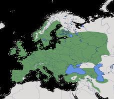 Karte zur weltweiten Verbreitung der Familie der Meisen (Paridae).