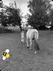 paardencoaching Helmond