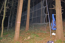 Fangnetze jeweils hangparallel L=11m, H=2,4m