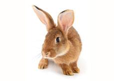 Kaninchen, Samtpfötli Shop