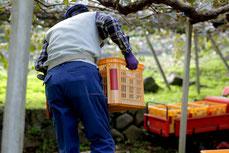 赤テープのついている道具は有機栽培専用