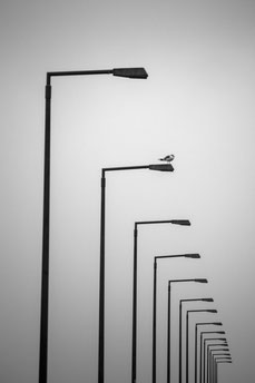 Möwe Laternen Felix Lachmann Heimatlicht Mecklenburg Vorpommern Stralsund Schwarzweiß minimalistische Fotografie Minimalismus Wiederholung Print Zen