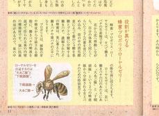 蜂 ハチ イラスト