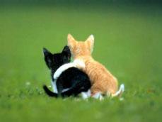 duo chatons noir et blanc et blanc et roux amis dans jardin