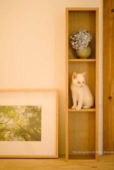 yu-photographs,yakushima,Gallery
