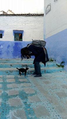 モロッコ旅行/シャウエンの猫