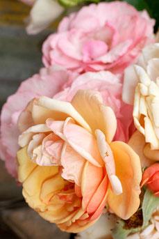 Rosenblüten (Foto: Mechthild Stein)
